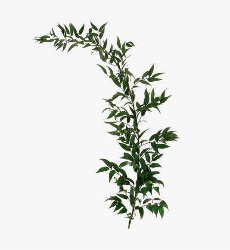 Fan Palm Arrangement
